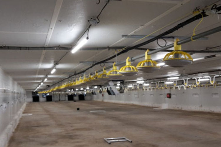 LED osvetlenie pre hydinárske farmy