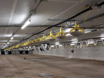 Úspora v osvetlení pre hydinárske farmy